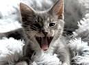 Meet Vermont's Pandemic Pets