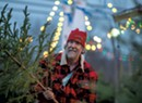 The Unique Yuletide Charm of Pete's Pines and Needles in Waltham