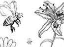 How to Solve the Pollinator Problem?