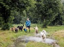 Dog Camps Offer Training and Off-Leash Adventures to Eager Pups