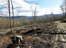 Climate Crisis Spawns a Push to Ban Logging in the Green Mountain National Forest