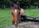 An Equine Rescue and the Vermont Hay Bank Hope to Help Horse Owners in Need