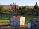 Border Buster Cider Is the Fruit of Three Local Orchards