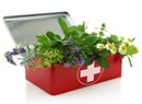 Herbal First-Aid Care