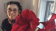 Memoriam: Diane Gabriel