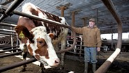 Selling the Herd: A Milk Price Crisis Is Devastating Vermont's Dairy Farms