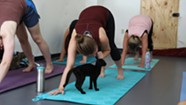 Stuck in Vermont: Yoga With Kittens in Winooski