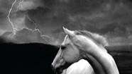 Kristina Stykos, <i>Horse Thief</i>