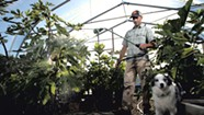 A Fig Farm Grows in Vermont