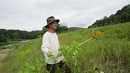 Mike Bald's Mission to Eradicate Invasive Plants
