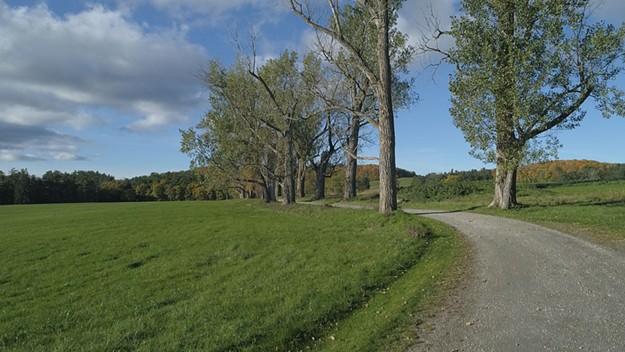 Shelburne Farms' Poplar Drive