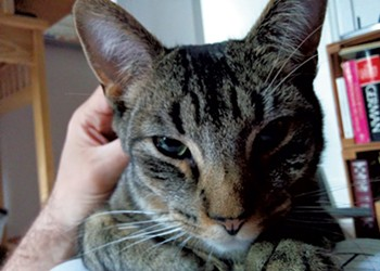 Burlington Man Tries Every Trick in Search for Missing Kitty