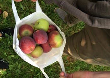 Dining on a Dime: Happy Valley Orchard's Cider Donuts