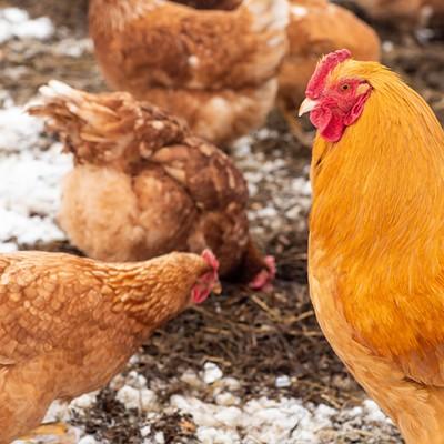 Vermont Farms in Wintertime