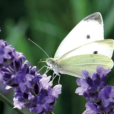 Vermont Pollinators