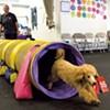 Best dog training company