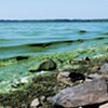 Blue-green algae in Lake Champlain
