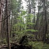 Off Trail: Roy Mountain Wildlife Management Area