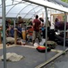 Soundbites: Nightshade Festival Returns to Williston
