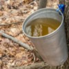 The Parmelee Post: Vermont Issues Boil Advisory for That There Sap Bucket, Bud