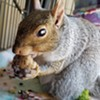 The Bushy Tale of Peanut the Squirrel