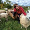 Albany Entrepreneur Links Sheep Farmers With the Yarn Market
