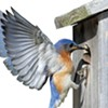 Avian Attraction: How to Bring Birds to Your Yard