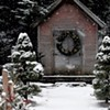Conifers for the Win: Planning for Your Winter Garden