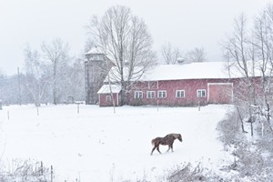 """COURTESY OF WALKOVER GALLERY - """"Headed to the Barn"""" by Paul Forlenza"""
