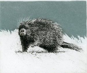 "COURTESY OF COLLECTIVE - THE ART OF CRAFT - ""Porcupine,"" etching and aquatint by J. Ann Eldridge"