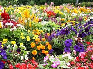 c8e669a7_garden.jpg