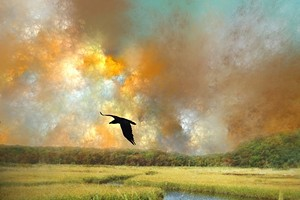 "COURTESY OF GLORIA KING MERRITT - ""Raven in the Marsh"" by Gloria King Merritt"