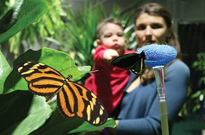 COURTESY OF ECHO - Mom and child in butterfly exhibit