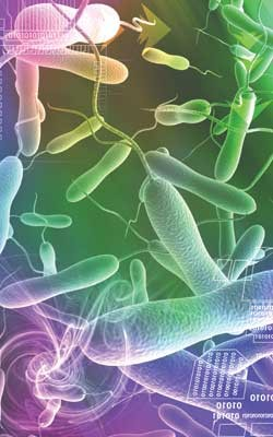 lm-cholera.jpg