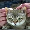 VT Fancy Felines [SIV61]