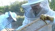 Wake Robin Honey Harvest [SIV193]
