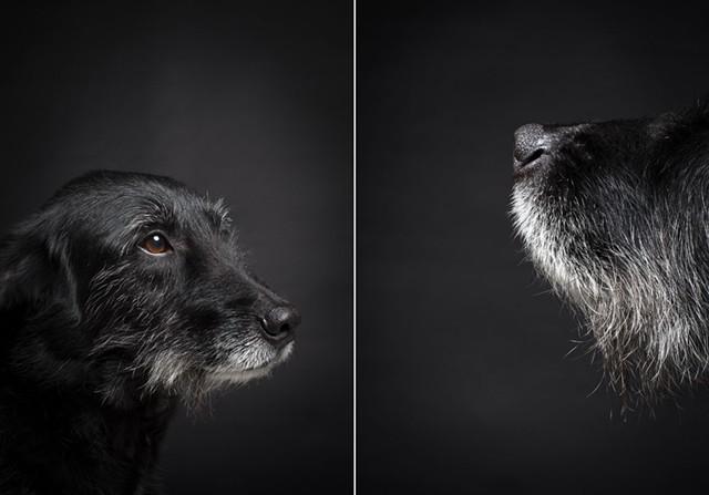 juddlamphere-olddogs-2.jpg