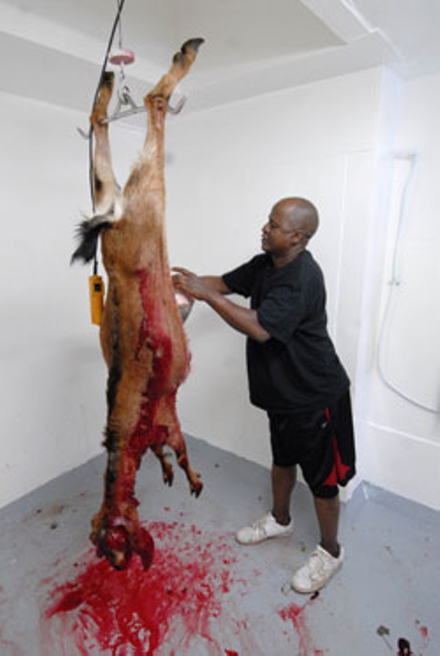 Yussuf Hassan butchers a goat at Winding Brook Farm - JEB WALLACE-BRODEUR