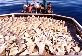 A boat full of fins, minus the sharks they came from.