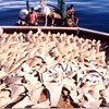 Oregon Signs Shark-Fin Ban Into Law, Beating California to the Punch