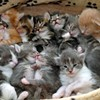 A Dozen or More Cats Killed in Animal Shelter Blaze