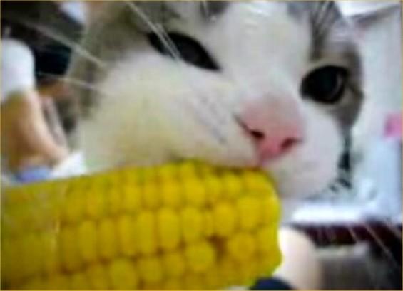 A feral cat devours crime lab evidence.