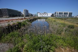 MIKE KOOZMIN - A marsh on the proposed Warriors stadium site has an unexpected history.
