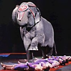 COPY; 2005 FELD ENTERTAINMENT - A Ringling Bros. circus elephant does what comes - naturally.