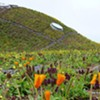 Academy of Sciences' Living Roof: More Than Just Seven Green Humps