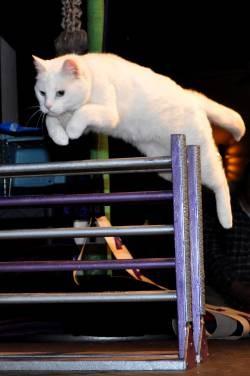 AcroCats Bring Kitty Hijinks To San Francisco Fur Real The - 29 cats lost way life