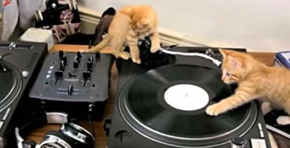 kittens_on_dj_decks.jpg