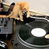 Adorable of the Day: Video Proof that Kittens Make Amazing DJs