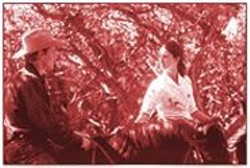 VAN  REDIN - All the Pretty Movies: Read Cormac McCarthy's novel instead.