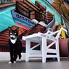 America's First Cat Cafe Now Open In Oakland